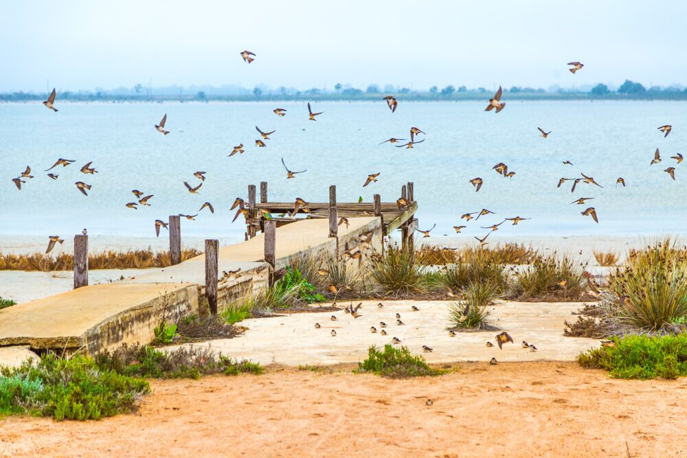 Migratory birds making the most of Lake Hawthorn