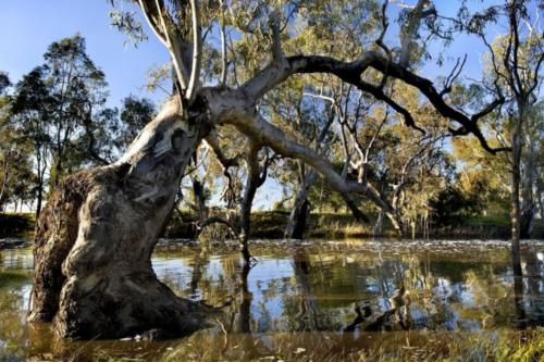 Wimmera - Delivering Our Catchments Our Communities